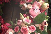 Fiori e piante - le rose