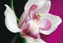 Fiori e piante - l'orchidea