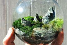 Terrarium / Il giardino in formato mini