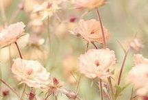 >>flower<<