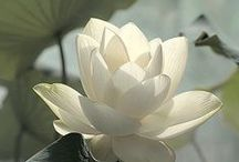 "bloom magic / Earth laughs in flowers.  ~Ralph Waldo Emerson, ""Hamatreya"""