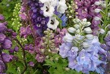 Garden Flowers / by Sarah Sweetcollie7