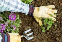 Pest Solutions / Pests in the Garden are not your enemy , Find ways to coexist and be in Charge!