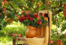 Herfst kleuren - Autumn