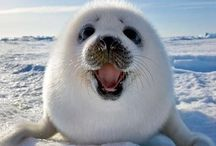 Arctic & Ocean dwellers / Animals which inspire conservation