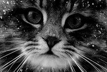Cat / Les petits trésors
