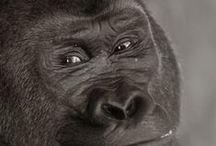Monkeys/ Primates