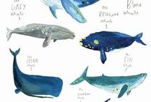 Whales /Sharkes/ Dolphins etc.