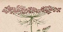 Herbal and botanical