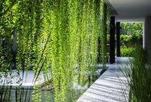 Vertical gardens / Gardens inside and out have been turned on their sides to give a fresh, beautiful feature in your home to enjoy every day.