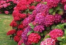 flowers  ................. / by Debbie Deligiannis