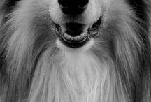 kutyuk