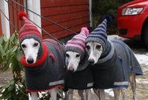Hounds / Pictures of our favourite types of dogs! Greyhounds, whippets, Irish wolfhounds and more...