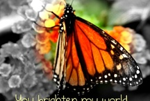 Brightwings Butterflies free flying magic / Beautiful #Monarch #butterflies for release at #weddings, funerals, naming days & other special occasions.  Available anywhere in New Zealand. A #butterfly release adds a moment of magic. #Brightwings Butterflies http://www.brightwings.co.nz