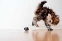 Cute Animals / by Nancy Badillo