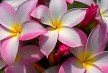 Beautiful Flowers / by Nancy Badillo