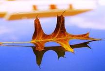 Autumn  / by Nancy Badillo