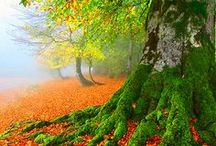 FALLING LEAVES / Beauty in transition: the color, texture and tones of nature.
