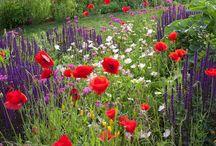 Home >>> Garden