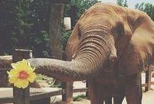 Elefantes <3 / by Amaya Santamaria Zeberio