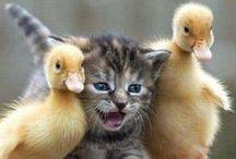 Kittens & Cats :)