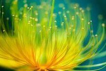 Moja miedza / Zioła, natura, naturalne sposoby na to, by być zdrowym i pomóc sobie w chorobie. Rośliny, które mogę sama wyhodować lub zebrać w pobliżu mojego domu.