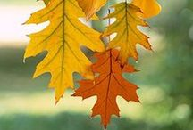 """Autumn / Here it comes. A for Autumn- or Amazing """"Indian Summer"""". A new season, a new school year, a new start of life. My favourite period of the year. Golden leaves help me remember to observe the present time..."""
