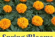 Flowers (Spring Blooms) / Photos of beautiful flowers to brighten the day, along with pins that included tips for growing beautiful flower gardens.