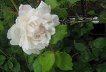 Flowers- And Gardenlove
