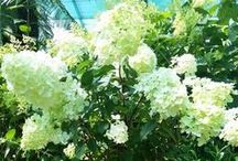 Stunning Flowering Plants
