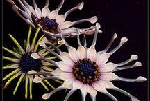Bloemen - Flowers / by mina bakgraag