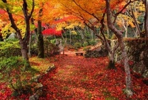japanese gardens / Inspirational Japanese garden designs and plants that are ideal for creating Japanese style gardens