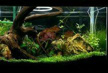 My Aquarium / My tank My fish tank My aquarium Meu aquario  Aquascape Aqua design Aquarium Fish tank