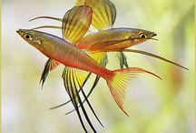 Fish (Peixes) / Peixes Fish Aquarium Fish tank Aquario