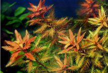 Aquatic Plants (Plantas Aquaticas) / Aquatic Plants Plantas Aquaticas