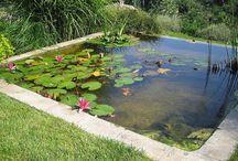 Pond (Lago) / Pond Tank Aquarium Lago