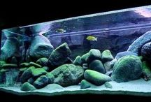African Cichlids Aquarium / Ciclideos Cichlids African Africanos Fish Aquarium Fish tank Aquario