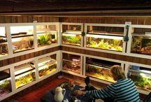 Aquarium Room / Aqua room Fish room Aquarium room Aquarium Fish tank Aquario