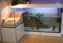 Turtle tank (Tartaruga) / Turtle tank Aquarium Pond Tartaruga Lago
