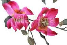 Wiosna / Wspaniały pomysł jak ozdobić dom i biuro kwiatami na wiosnę, bez konieczności ich podlewania!