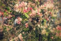 Spring / Spring Garden Awakening