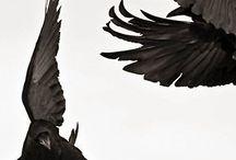 Tellius || The Birds