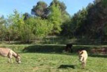 Els burros / A Can Canal tenim tres burros i un en camí...