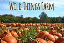 Fall Farm Fun