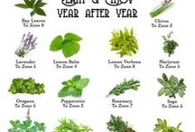 Handy Herbs / All about herbs