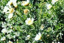 Gardening, flowers & nature.