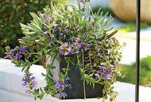 Gardening, pots & plants.