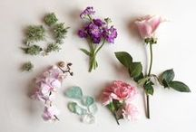 aesthetic | plants / i'd rather wear flowers in my hair than diamonds 'round my neck | aesthetic