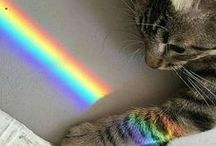 aesthetic | cats / cats are adorable and i love them | aesthetic