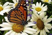 Butterflies, Motyle